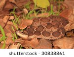 False Viper crawling in the leaf pile - stock photo