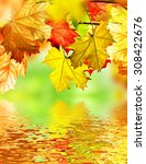 autumn foliage | Shutterstock . vector #308422676