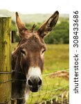 Cute Donkey Looking At The...