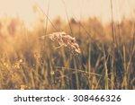 grass abstract background ... | Shutterstock . vector #308466326