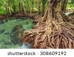 Mangrove Trees In A Peat Swamp...