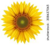 sunflower isolated  vector... | Shutterstock .eps vector #308637065
