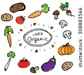 hand drawn fresh organic color... | Shutterstock .eps vector #308883566