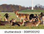 A Herd Of Deer In The Phoenix...
