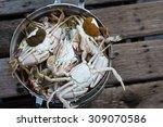 the stream crabs in the stream... | Shutterstock . vector #309070586
