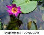 beaulfull water lily in the... | Shutterstock . vector #309070646
