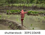 farmer of lao carry young plant ... | Shutterstock . vector #309110648