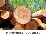 sawn up tree | Shutterstock . vector #30918658