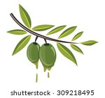 olive vector illustration   Shutterstock .eps vector #309218495