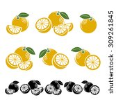 grapefruit set. vector | Shutterstock .eps vector #309261845