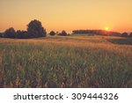 Vintage Sunset Over Summer...