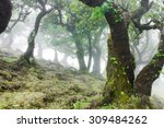 Fairy Forest  Laurel Forest In...