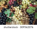 mix of various grapes in wicker ... | Shutterstock . vector #309562076