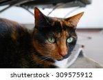 Calico Cat Sitting Underneath ...