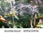 Small photo of the forest spiderweb of an abstract form hangs in air space with autumn foliage