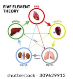 five element theory. oriental... | Shutterstock .eps vector #309629912