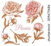 detailed hand drawn flowers set ... | Shutterstock .eps vector #309675686