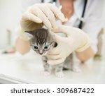 veterinarian cleans ears cat | Shutterstock . vector #309687422