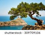 relic juniper on the rock against the cape Capchik. Crimea