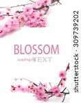 plum flowers blossom on white... | Shutterstock . vector #309739202