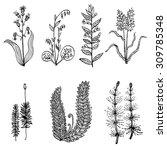 vector set of decorative plants.... | Shutterstock .eps vector #309785348