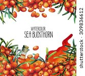 watercolor sea buckthorn card.... | Shutterstock . vector #309836612