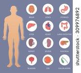 human organs flat style banner | Shutterstock . vector #309976892
