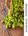 fresh green hops on a wooden... | Shutterstock . vector #310029608
