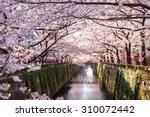 cherry blossom lined meguro... | Shutterstock . vector #310072442
