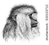 macaque   Shutterstock . vector #310123712
