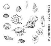 sea shells set | Shutterstock .eps vector #310275536