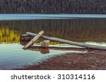 Small photo of Tranquil evening scenery with peeled, lifeless trees fallen, sunken in the pellucid water of a lake. Toned colors.