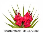 Red Gladiolus On A White...