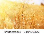 meadow  with sunlight | Shutterstock . vector #310402322
