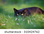 Black Cat Hiding In The Green...