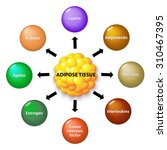 adipose tissue is an endocrine... | Shutterstock .eps vector #310467395