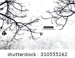 trees and branches silhouette... | Shutterstock .eps vector #310555262