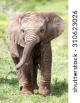 Cute Baby Elephant Calf In Thi...