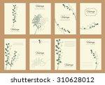 mimosa flower  leaves mimosa... | Shutterstock .eps vector #310628012