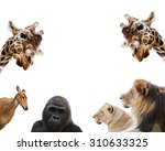 Stock photo set of animals 310633325