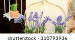 decorative lavander and other...   Shutterstock . vector #310793936