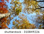 Sky Through The Autumn Leaves