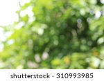 blurred green leaf background ... | Shutterstock . vector #310993985