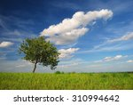 single tree with clouds in the... | Shutterstock . vector #310994642