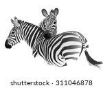 zebras. vector drawing.... | Shutterstock .eps vector #311046878