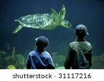 Two Boys Watching A Sea Turtle...