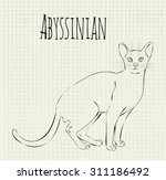 abyssinian cat vector drawing... | Shutterstock .eps vector #311186492