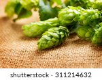 hop close up. green fresh cones ... | Shutterstock . vector #311214632
