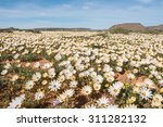A Carpet Of Wild Flowers At...