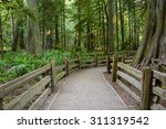 Wooden Fenced Footpath Guides...